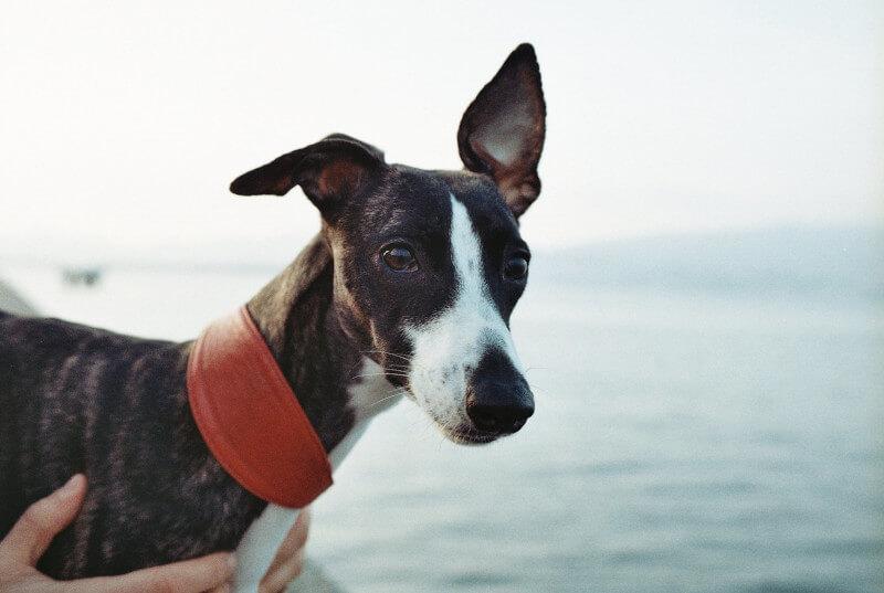Poszukujesz odpowiedzialnego opiekuna dla psa?